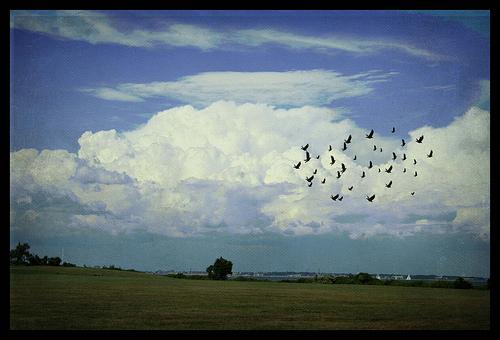"""""""Θλίψη"""" από την Rose Aubut, flickr"""